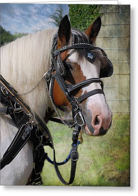Gypsy Greeting Cards - Pandora in Harness Greeting Card by Fran J Scott