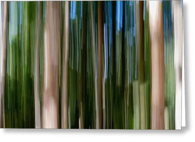 Plant Roots Greeting Cards - Panning Forest 2 Greeting Card by Stylianos Kleanthous