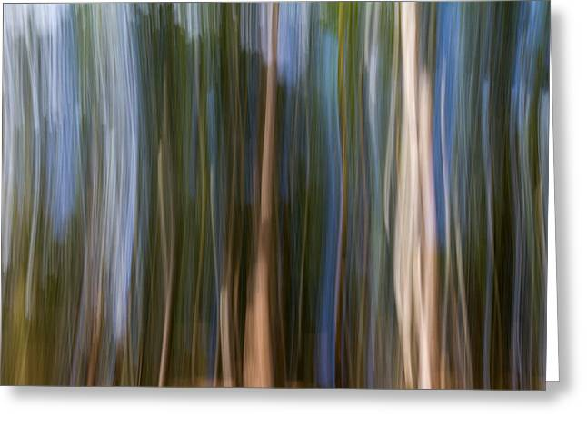 Plant Roots Greeting Cards - Panning Forest 3 Greeting Card by Stylianos Kleanthous