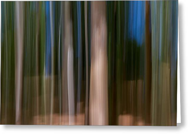 Plant Roots Greeting Cards - Panning Forest Greeting Card by Stylianos Kleanthous