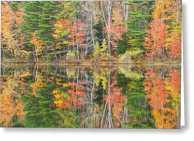 New England Wilderness Greeting Cards - Panorama of Fall Color on Torsey Pond Readfield Maine Greeting Card by Keith Webber Jr