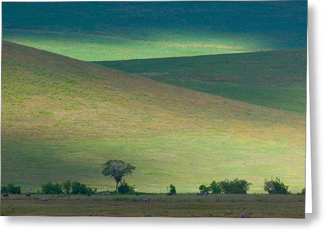 Craters Greeting Cards - Panoramic View Of Hill, Ngorongoro Greeting Card by Panoramic Images