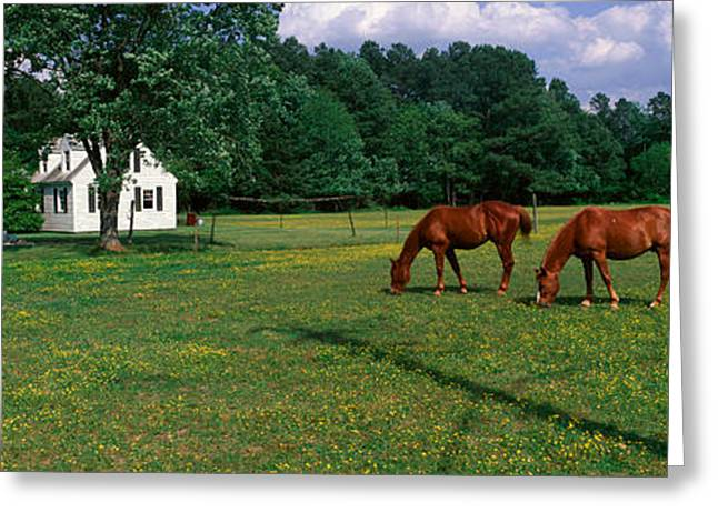 Panoramic View Of Horses Grazing Greeting Card by Panoramic Images