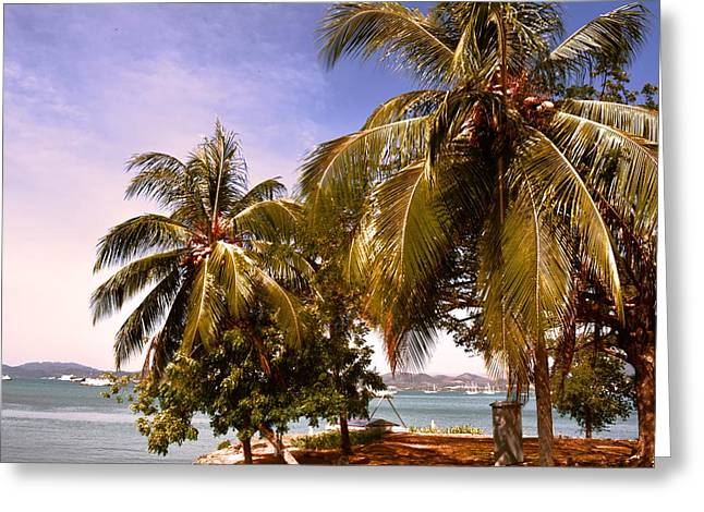 Coconut Greeting Cards - Panoramic view of nature with the green coconut trees  Greeting Card by Siti  Syuhada