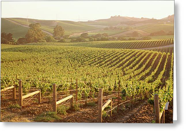Panoramic View Of Vineyards, Carneros Greeting Card by Panoramic Images