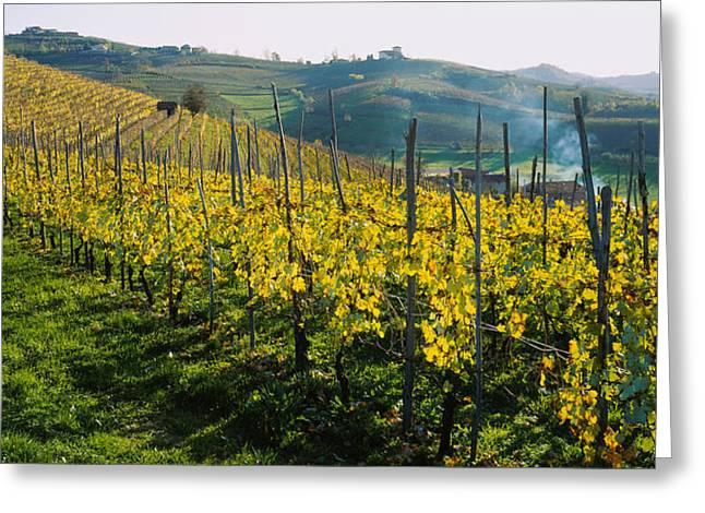 Vineyard Landscape Greeting Cards - Panoramic View Of Vineyards, Peidmont Greeting Card by Panoramic Images