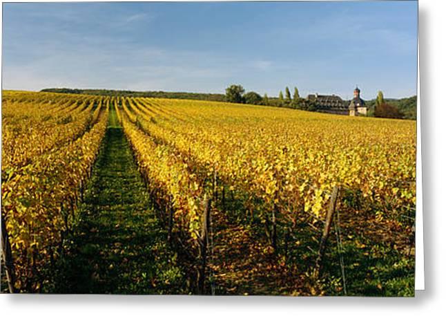 Winemaking Greeting Cards - Panoramic View Of Vineyards, Schloss Greeting Card by Panoramic Images