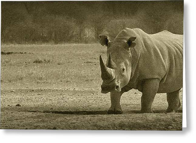 Rhinoceros Greeting Cards - PANOWILD 031 A.Carrera Greeting Card by Alberto Carrera
