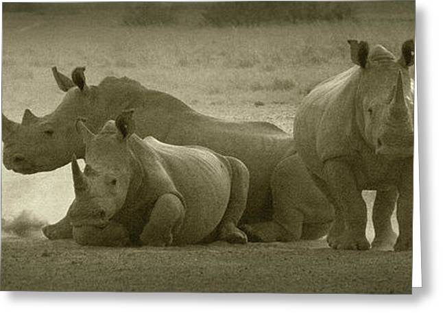 Rhinoceros Greeting Cards - PANOWILD 060 A.Carrera Greeting Card by Alberto Carrera