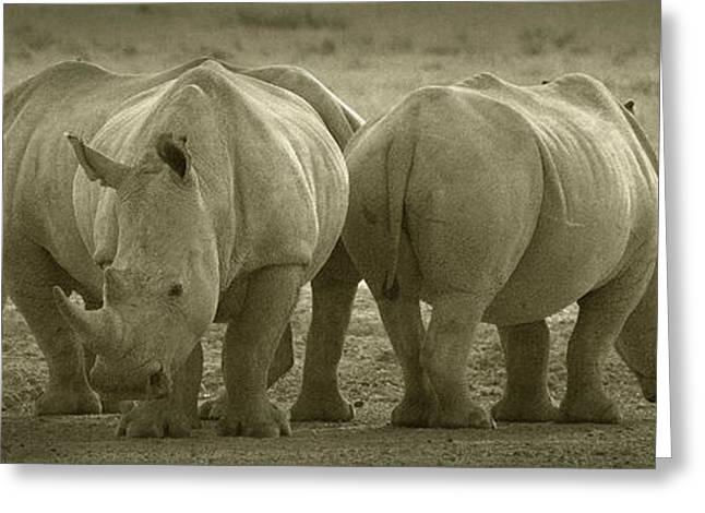 Rhinoceros Greeting Cards - PANOWILD 110 A.Carrera Greeting Card by Alberto Carrera