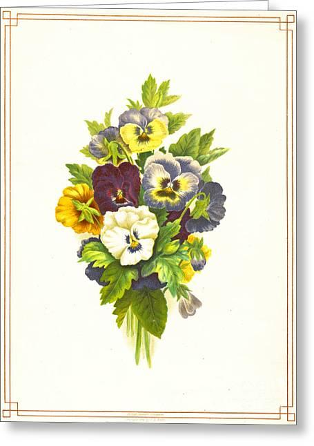 Pansies 1874 Greeting Card by Padre Art