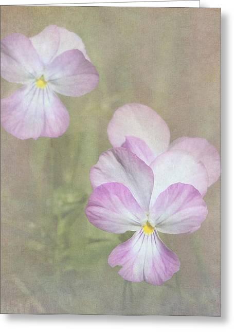 Color Enhanced Greeting Cards - Pansies Greeting Card by Angie Vogel