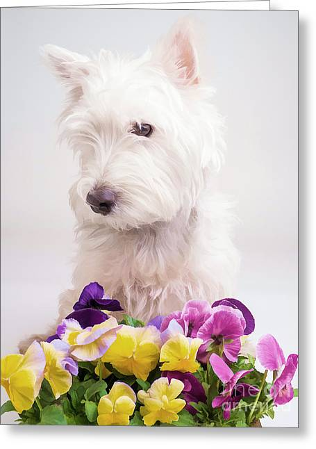 Canine Digital Art Greeting Cards - Pansies Greeting Card by Edward Fielding