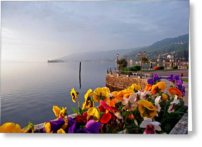 Maggiore Greeting Cards - Pansies on Lake Maggiore Greeting Card by Peter Tellone