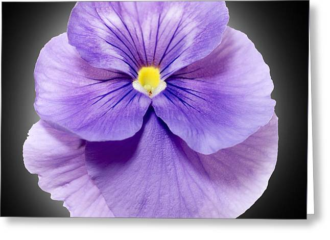 Up Close Flowers Greeting Cards - Pansy 4 Greeting Card by Tony Cordoza