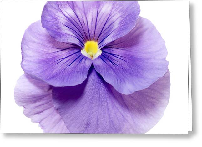 Up Close Flowers Greeting Cards - Pansy 5 Greeting Card by Tony Cordoza