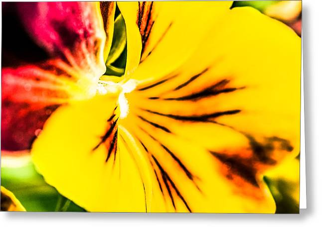 Wild Pansy Greeting Cards - Pansy Flower 1 Greeting Card by Alexander Senin