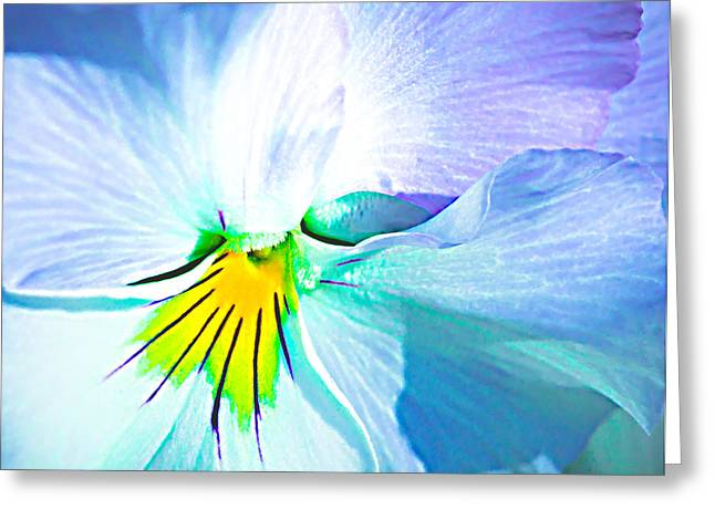 Ease Greeting Cards - Pansy Flower 6 Greeting Card by Alexander Senin