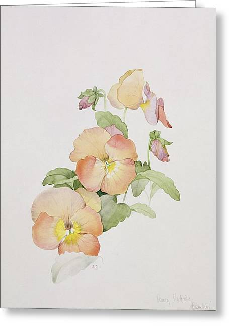 Pansy Greeting Cards - Pansy hybrids Bambini Greeting Card by Sarah Creswell