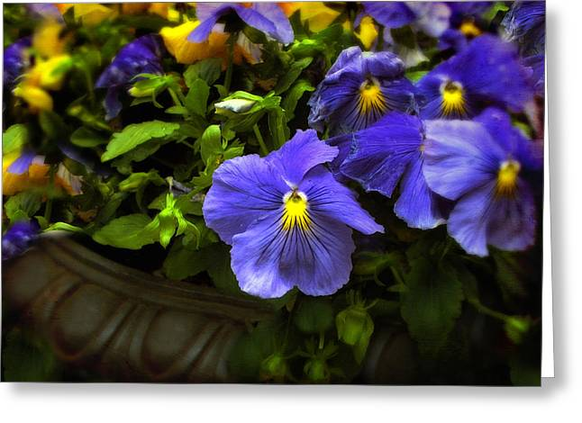 Pansy Planter Greeting Card by Jessica Jenney