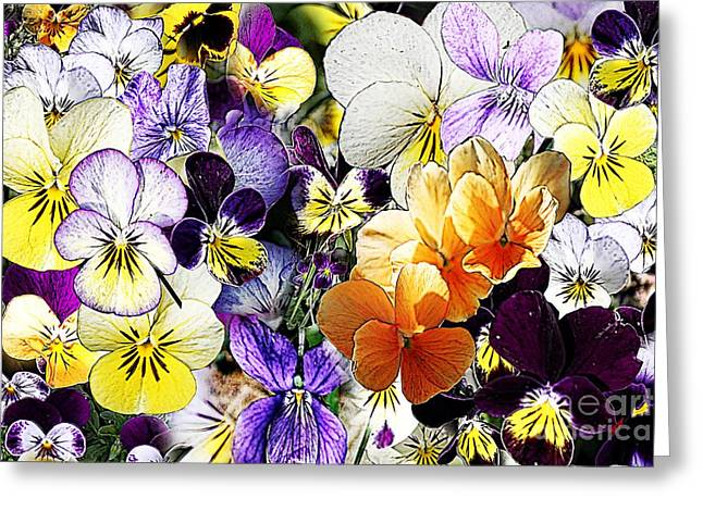 Pansy Posy Greeting Card by Erica Hanel