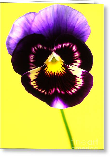 Carl Perkins Greeting Cards - Pansy - Smile Greeting Card by Carl Perkins