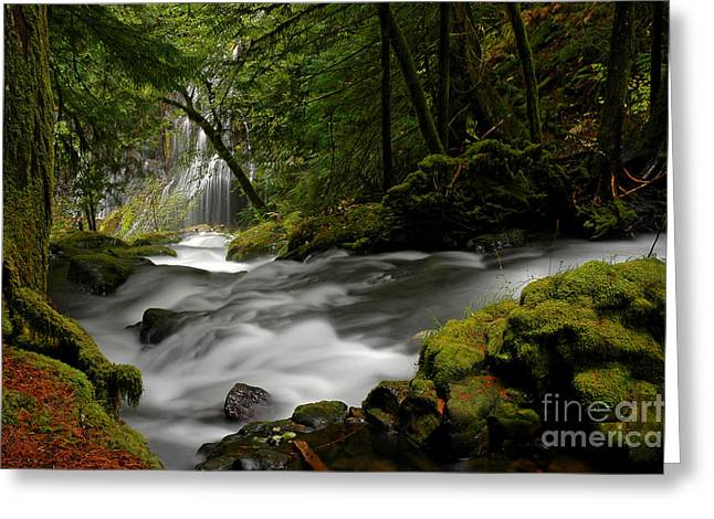 Boren Greeting Cards - Panther Creek Falls Greeting Card by Nick  Boren