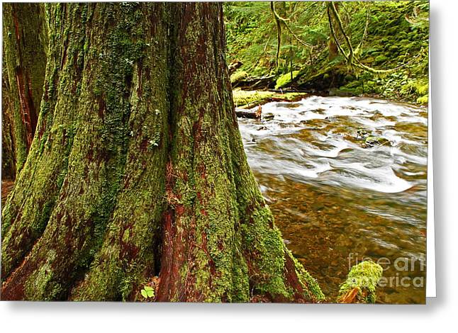 Babbling Greeting Cards - Panther Creek Thirty Eight Greeting Card by Donald Sewell