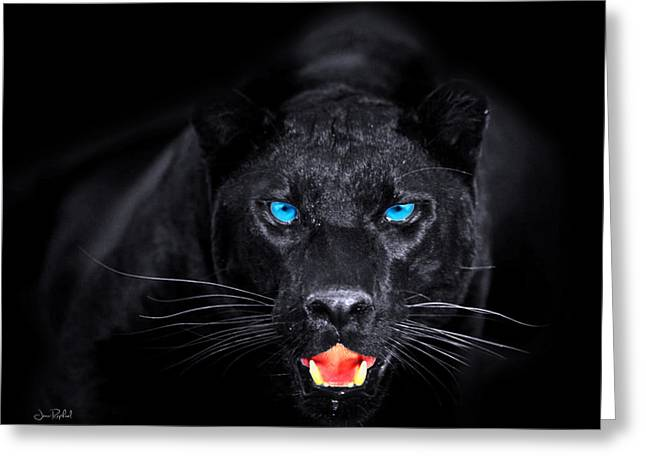 Panther Greeting Card by Jean raphael Fischer