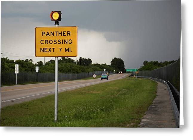 Panther Warning Sign Greeting Card by Jim West