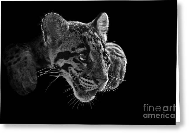 Panting Beauty Greeting Card by Ashley Vincent