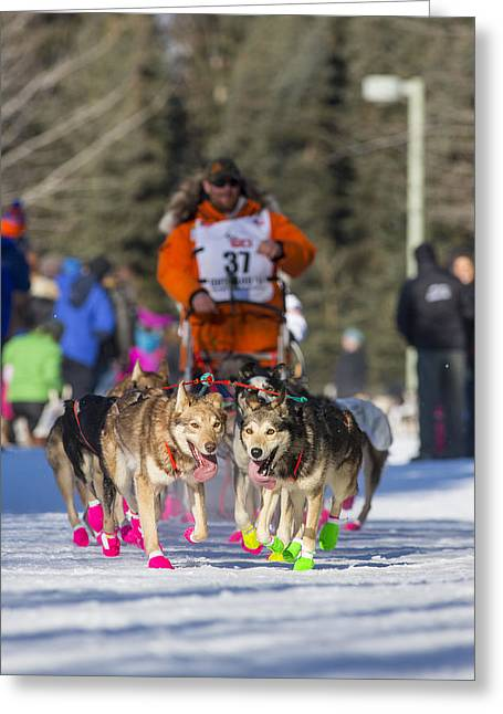 Dog Sled Greeting Cards - Panting Leaders Greeting Card by Tim Grams
