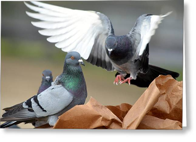 On Paper Photographs Greeting Cards - Paper Bag Pigeons 2 Greeting Card by Fraida Gutovich