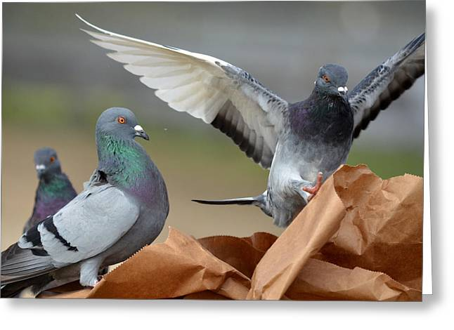 On Paper Photographs Greeting Cards - Paper Bag Pigeons 3 Greeting Card by Fraida Gutovich