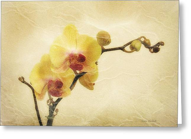 Plant Life Digital Greeting Cards - Paper Flowers Greeting Card by Donna Blackhall