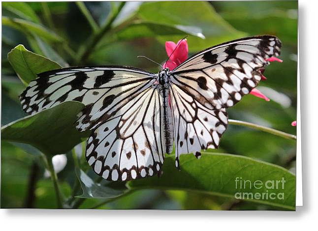 Kite Greeting Cards - Paper Kite Butterfly Greeting Card by Carol Groenen