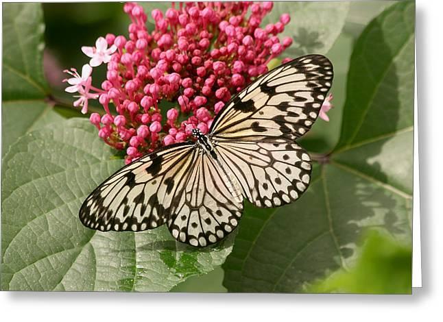 Paper Kite Butterfly Greeting Card by Kim Hojnacki