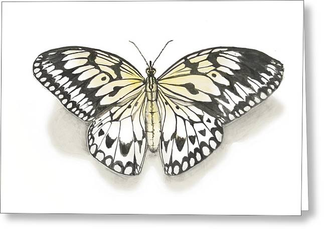 Kite Ceramics Greeting Cards - Paper Kite Butterfly Greeting Card by Nathan Ryan
