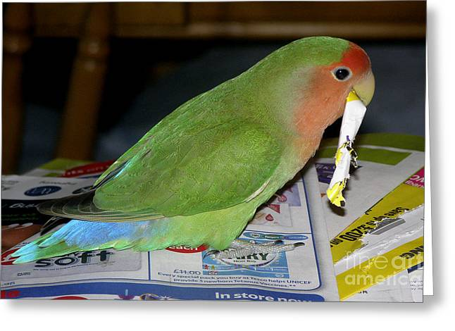 Peach-faced Lovebird Greeting Cards - Paper Shredder Pickle Greeting Card by Terri  Waters