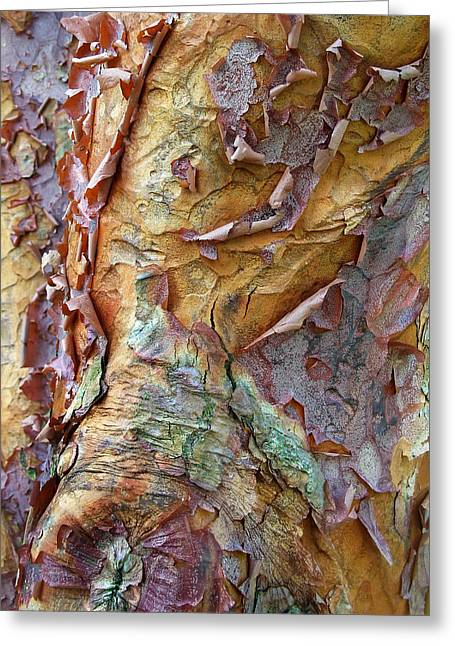 Colorful Trees Digital Greeting Cards - Paperbark Abstract Greeting Card by Jessica Jenney