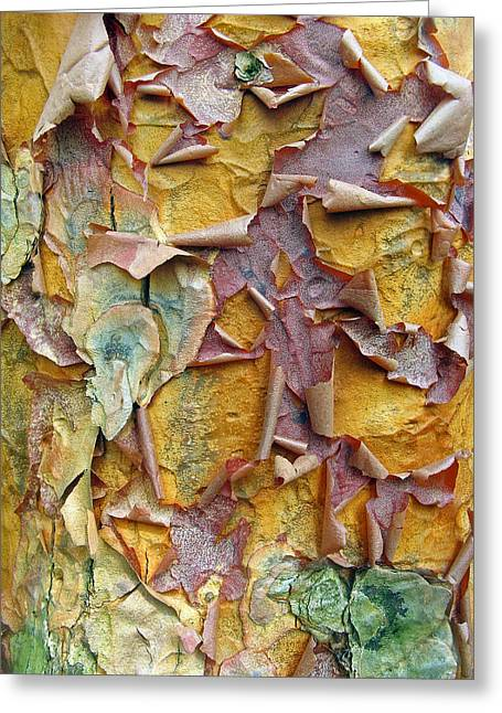 Colorful Bark Greeting Cards - Paperbark Maple Tree Greeting Card by Jessica Jenney
