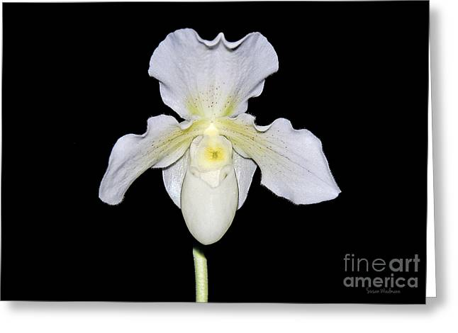 Susan Wiedmann Greeting Cards - Paphiopedilum Orchid F.C. Puddle Superbum  Greeting Card by Susan Wiedmann