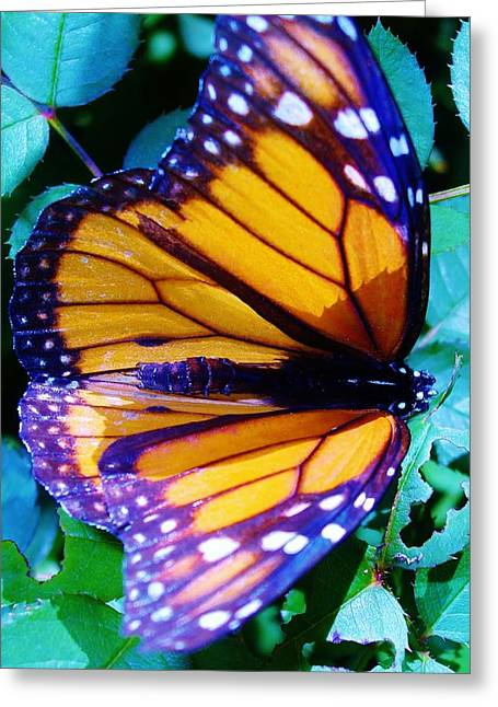 Michel Croteau Greeting Cards - Papillon Greeting Card by Michel Croteau