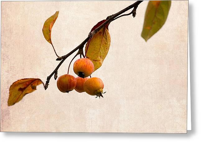 Fruit Tree Art Greeting Cards - Paradise Apple 12 Greeting Card by Alexander Senin