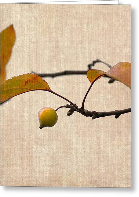 Fruit Tree Art Greeting Cards - Paradise Apple 3 - Square Greeting Card by Alexander Senin