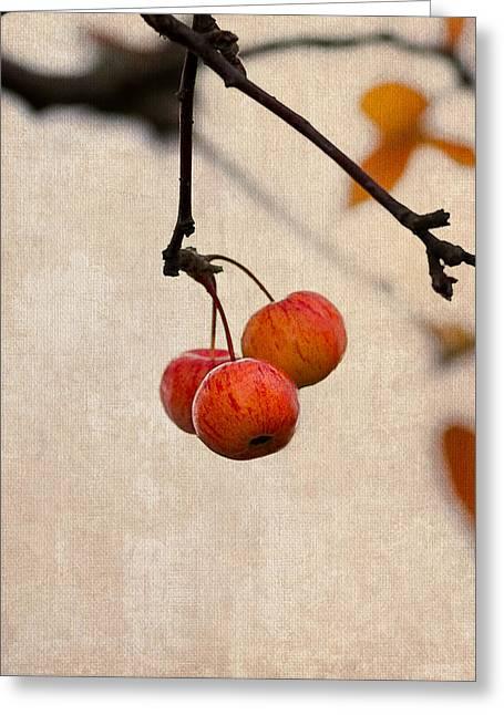 Fruit Tree Art Greeting Cards - Paradise Apple 8 - Square Greeting Card by Alexander Senin