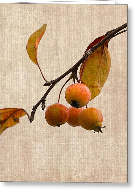 Fruit Tree Art Greeting Cards - Paradise Apple 9 - Square Greeting Card by Alexander Senin