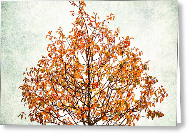 Fruit Tree Art Greeting Cards - Paradise Apple Greeting Card by Alexander Senin