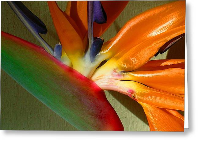 Tropical Birds Of Hawaii Greeting Cards - Paradise Morning Greeting Card by James Temple
