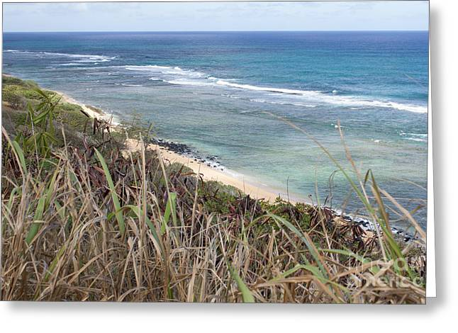 Paradise Overlook Greeting Card by Suzanne Luft
